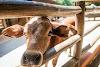 Image 3 of Mini Farm Pet Zoo, [missing %{city} value]