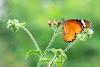 Live traffic in Asola Bhatti Wildlife Sanctuary New Delhi