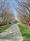 Image 4 of Dallas Arboretum and Botanical Garden, Dallas