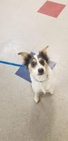 Image 8 of Union County Humane Society, Marysville