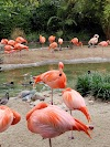 Image 4 of San Diego Zoo, San Diego