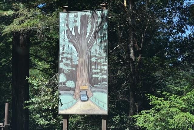 Drive-Thru Tree Park