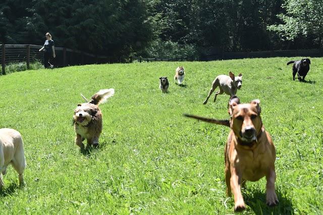Dog Works Ranch LLC image