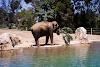 Image 6 of San Diego Zoo, San Diego