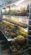 Image 5 of Mahallati Flower Market - بازار گل محلاتی, تهران