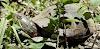Image 3 of Julie Metz Wetlands Trailhead Parking, Woodbridge