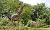 Image 4 of Pittsburgh Zoo & PPG Aquarium, Pittsburgh