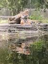 Image 5 of Jacksonville Zoo & Gardens, Jacksonville