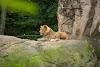 Image 6 of Pittsburgh Zoo & PPG Aquarium, Pittsburgh