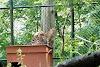 Image 4 of Connecticut's Beardsley Zoo, Bridgeport