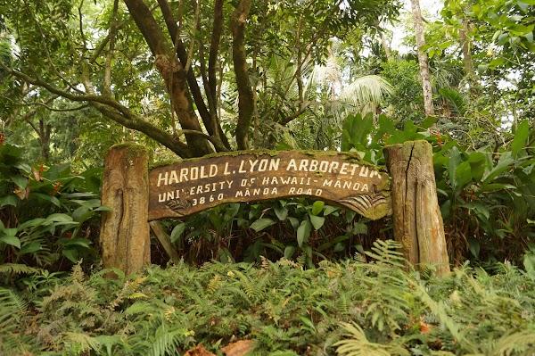 Popular tourist site Lyon Arboretum in Honolulu