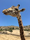 Image 5 of San Diego Zoo Safari Park, Escondido