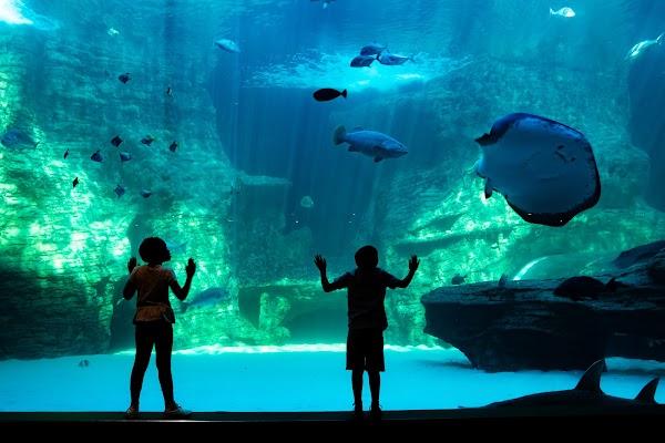 Popular tourist site Two Oceans Aquarium in Cape Town