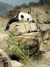 Image 5 of National Zoological Park, Washington