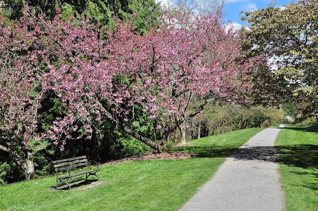 List item Washington Park Arboretum UW Botanic Gardens image