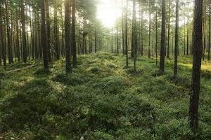 Metskonna parkla