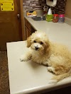 Image 6 of Petmobile Pets, Garland