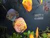 Image 8 of Georgia Aquarium, Atlanta