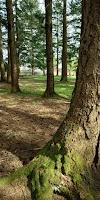 Image 4 of Gunderson Park, Delta