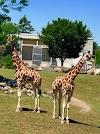 Image 6 of Zoo de Granby, Granby