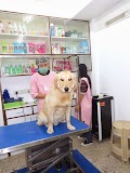 PetSpot- Grooming, Spa & Travel in gurugram - Gurgaon