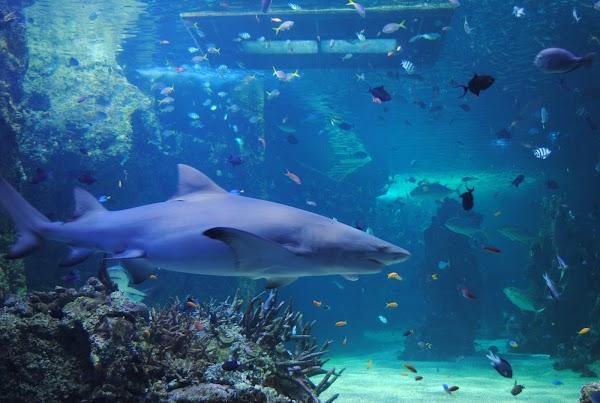 Popular tourist site SEA LIFE Sydney Aquarium in Sydney