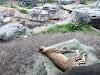 Image 5 of Dallas Zoo, Dallas