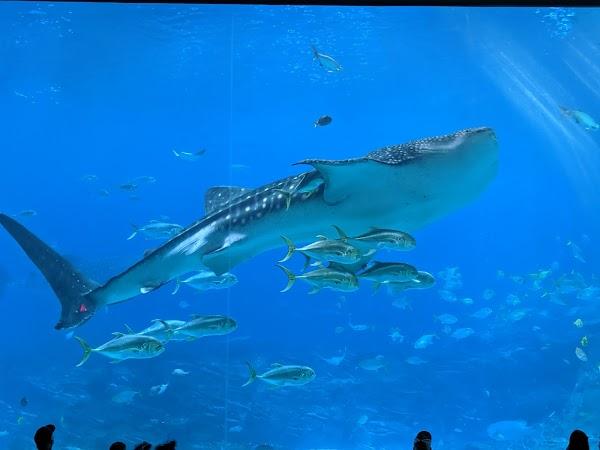 Popular tourist site Georgia Aquarium in Villa Rica