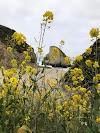 Image 8 of Coyote Valley RV Resort, San Jose
