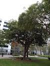Image 4 of Jackson Memorial Hospital, Miami