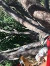 Image 5 de Accro-Parc Mas de l'Ayre, Malons-et-Elze