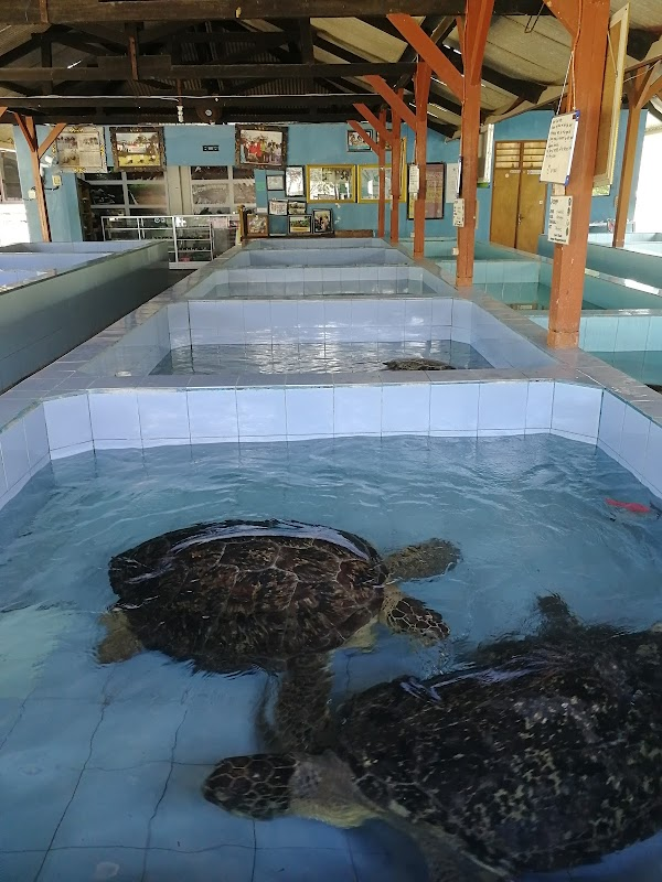 Popular tourist site Turtle Conservation And Education Center in Denpasar City