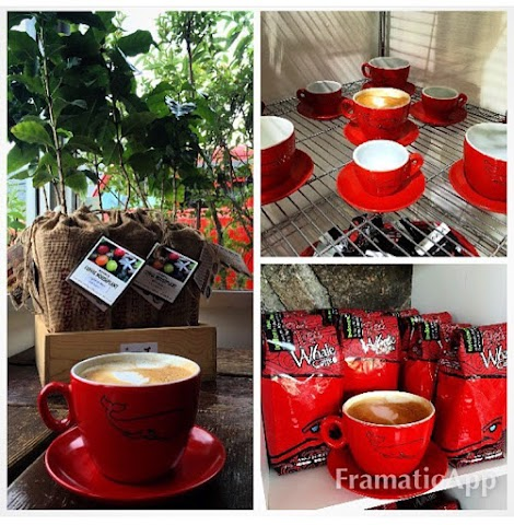 Red Whale Coffee image