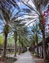 Image 7 of University of South Florida, Tampa