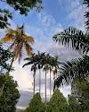 Imagen 7 de Centro Vacacional Las Palmeras, [missing %{city} value]