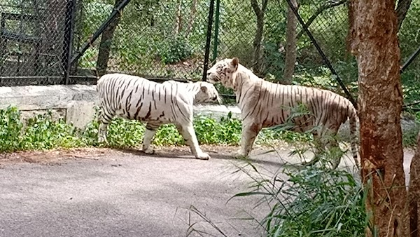 Popular tourist site Bannerghatta Biological Park in Bengaluru