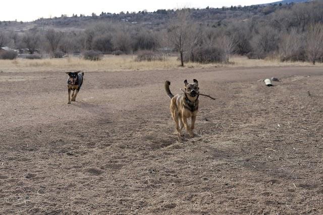 List item Bear Creek Dog Park image