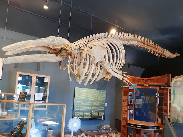 The Whale Museum image