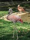 Image 6 of Montgomery Zoo, Montgomery