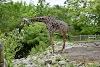 Image 3 of Pittsburgh Zoo & PPG Aquarium, Pittsburgh