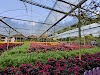 Image 3 of Genting Strawberry Leisure Farms, Genting Highlands