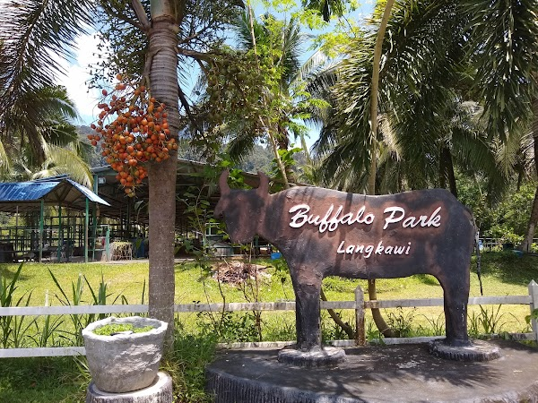 Popular tourist site Buffalo Park in Langkawi