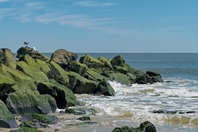 Cape May image