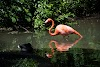 Image 7 of Pittsburgh Zoo & PPG Aquarium, Pittsburgh