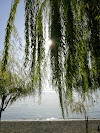 Image 2 of Parco La Pineta, Acquapendente