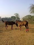 Equestrian Sports Academy in gurugram - Gurgaon