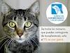 Get directions to Clínica del Comportamiento y Salud Animal (Clinica Veterinaria) Heróica Puebla de Zaragoza