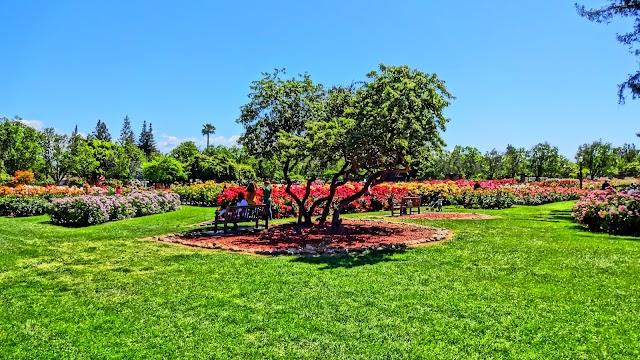 Municipal Rose Garden image
