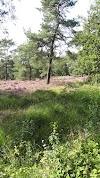 Image 2 of Camping Zonneland, Nispen