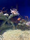 Image 7 of Georgia Aquarium, Atlanta